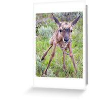 Teetering Antelope Fawn Greeting Card