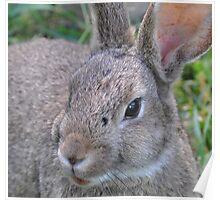 el Bunny Bandito Poster