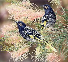 Regent Honeyeaters by HeidiWillis