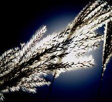 Seeds of Heaven. by Paul Rees-Jones