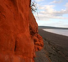 Chignecto Cliffs by Alyce Taylor