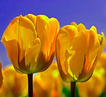 Yellow Tulips by Linda Miller Gesualdo