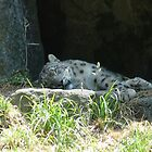 Let sleeping Leopards lie by Soulmaytz