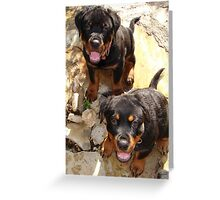 Clyde and Fluff (Rottweiler Puppies) Greeting Card