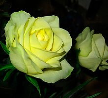Lemon Roses by haymelter