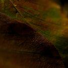 Autumn by KitPhoto