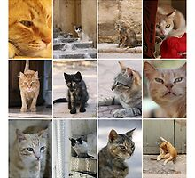 Cats of Malta. by Ellen van Deelen