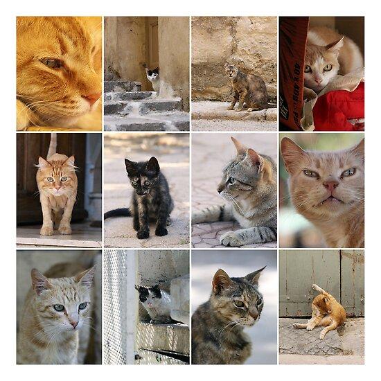 Cats of Malta. by Ellen van Deelen