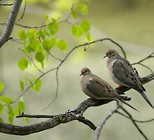 Morning Doves by JimGuy