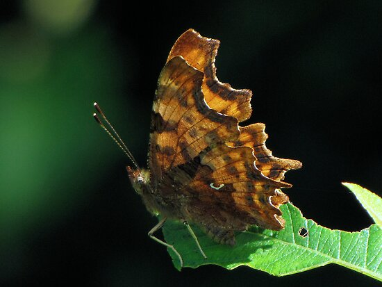 Comma here by Sharon Perrett