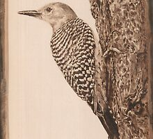 Red-Bellied Woodpecker by Summarley