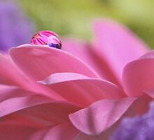 On Pink by HelenBeresford