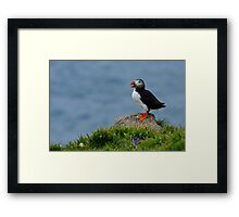 Rock Puffin Framed Print