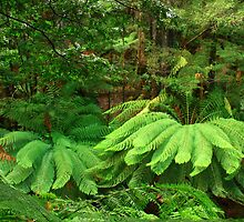 ....fern nest by phillip wise
