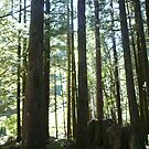 OUR CAMPSITE.....GOLDEN EARS PARK BRITISH COLUMBIA by DIANEPEAREN