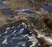 Advancing floodwaters in the Okavango by nymphalid