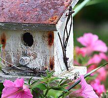 The Bird Shack by Kelly Cavanaugh