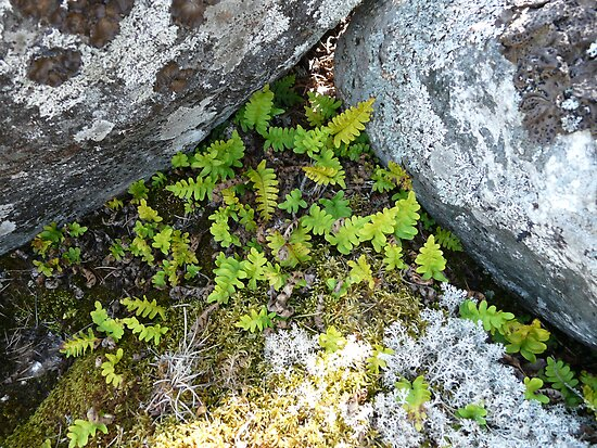 Little Green Plants  in the Rocks by MaeBelle
