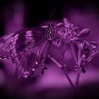 Butterfly in Purple by Sandy Keeton