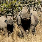 Black Rhino Duo by Graeme  Hyde