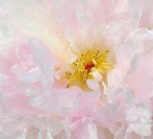 Pretty Pink Peony by Jacky Parker