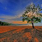 Lone Tree by Ron Waldrop
