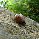 snail browsing by armadillozenith