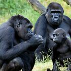 Gorilla Wisdom by ApeArt