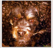 My Dog Under Glass by Terry Temple