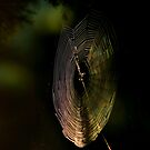 web light..... by David Murphy