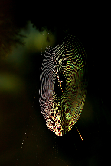 web light..... by David Murphy