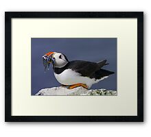Puffin with Sandeels Framed Print