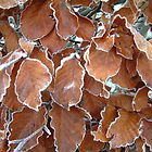Icy Leaves by TREVOR34