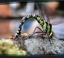 Dragonfly 2 by TREVOR34