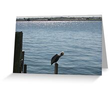 Pelican at St. Pete's Beach Pier 2 Greeting Card