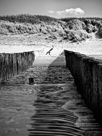 Catch by Dirk Delbaere