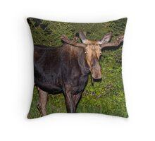 Nightwalker: Bull Moose Throw Pillow