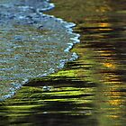 Spring Reflections by Barbara Burkhardt
