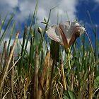 little white field flower by Jimmy Joe