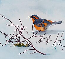 Visitation-Varied Thrush by Pete Janes