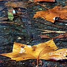Autumn Textures by Trish Woodford