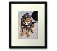 It Wasn't Me - Rottweiler Puppy Framed Print