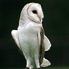 Owl by hans p olsen
