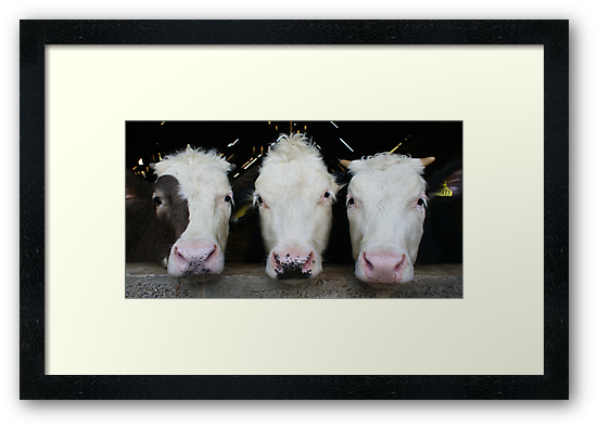 Three of a Kind by Chris Tait