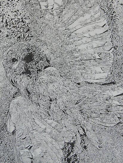 young tawny owl by ravibuddiga