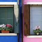 Windows by Beauty Vault Photo