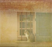 UN CHAT REGARDE MA FENETRE by Gilad