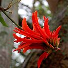 THE CORAL TREE by Magaret Meintjes