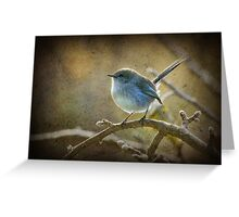 Fairy Wren - Non breeding male Greeting Card