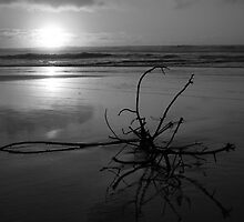 Sunrise in Black and White by DianaC
